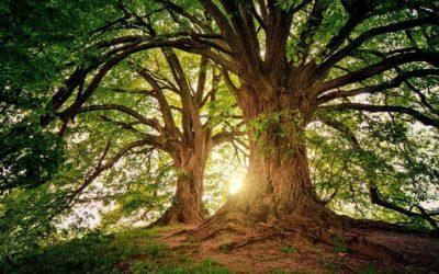 21 de setembro – Dia da Árvore